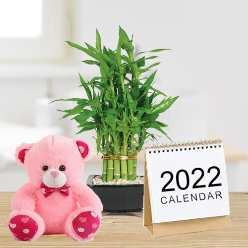 Captivating Lucky Bamboo Plant with 6 inch Teddy