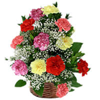 Mixed Carnations Arranged in a Basket