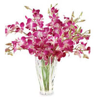 Resplendent fresh humper Orchids in a Vase