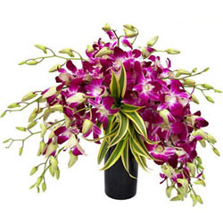 Precious 12 Orchids Composition in Glass Vase
