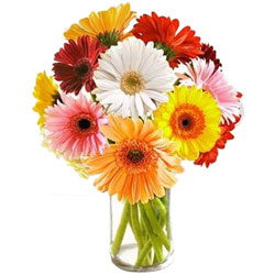 Arrangement of Multicolored Gerberas in Glass Vase