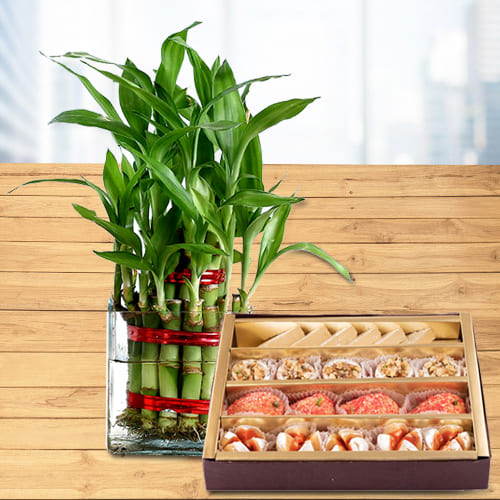 Delightful Gift of Two Layer Lucky Bamboo Plant in Glass Pot with Assorted Haldiram Sweets<br>