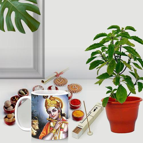 Classic Gift of Holy Tulsi Plant with Puja Gift Items