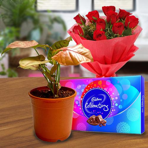 Elegant Gift of Indoor Plant with Chocolate N Rose Bouquet