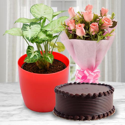 Ever-Blooming Syngonium Plant with Cake N Rose Bouquet